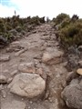 Path toward Mt. Kilimanjaro