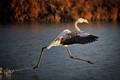Dashing Flamingo.