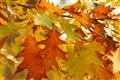 Kentes kalns+  22.10. 2011.  (78)