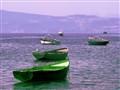 Lavender Harbor