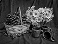 Still Life in BW