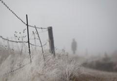 Misty morining