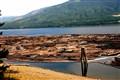 BC Lumber gather