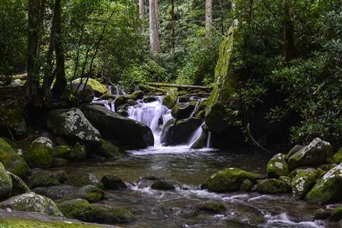 Roaring Fork Creek, GSMNP