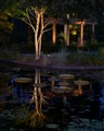 Reflecting Pond at Dusk