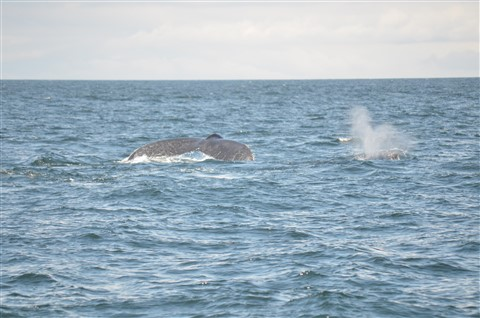 Whale Watch, Cape Cod, MA