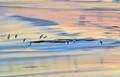 Sea edge flight