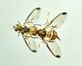 A little fly