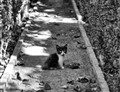 Gatito (Tiny cat)