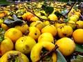 Keep ripening