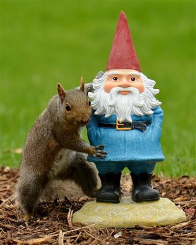 Squirrel's New Friend (1280x1600)