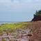 Mossy shore