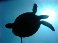 Turtle1, Dili Rock, September 30 10