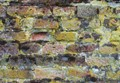 Brick wall lens resolution check - with Lichens.
