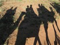 Shadow couple on camel back
