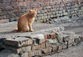Red bricks, red cat