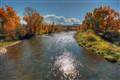 Aspens, Colorado River