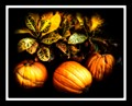 Three Pumpkins in Salado