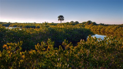 Blackpoint Drive in Merritt Island in late afternoon
