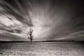 arbre seul et champs de pierre