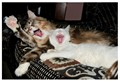 Laughing Cats