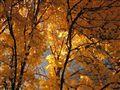 Autumn through colored glasses