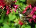 hummer flying