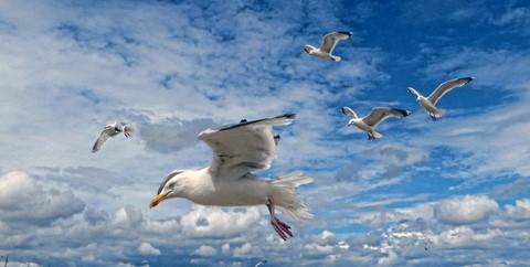 Gull Squadron_P1090131