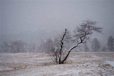 DSC_4661_winter