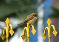 Birding in urbania
