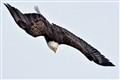 eagle_4220