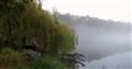 Weeping Fog