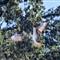 Lakamas Lake Osprey-4302