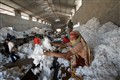 cotton's industry in Gujarat (india)