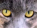 Cat eyes up close and personal....