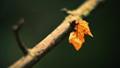leaf on twig