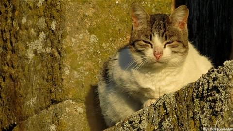 Cat on window 2