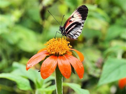 Butterfly on rain soaked flower