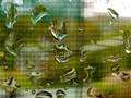 Waterdrops on the Window