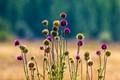 Wild Flowers-8689