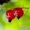 A pair of.. berries
