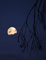 Moon and branches