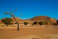 Nikon in the desert
