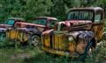 Three rusted trucks in a field