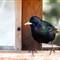 2012-03-02_12-17-48 • NEX-5N + 280mm f4 APO-Telyt-R - Birds_00_large_Q12
