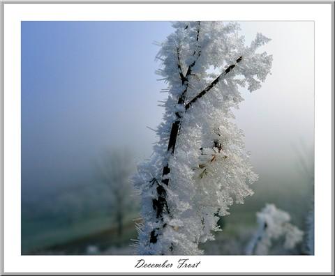 December frost I