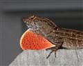 lizard_04_small
