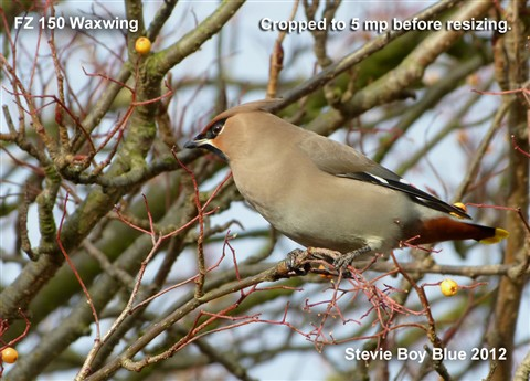 A Waxwing for DPR