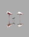 Flamingo & Stilt in Mangrove wetland Ajman, UAE