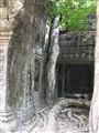 Ta Prohm, Angkor Wat Cambodia